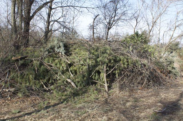 The Brush Pile