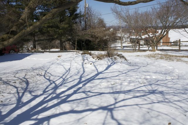 Snow Shadows in the Front Yard