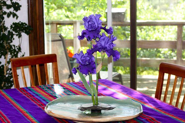 Iris on display