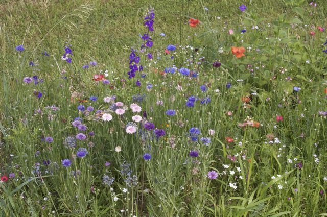 Wildflower mix on the hillside