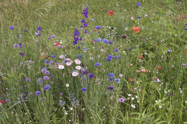 Wildflower mix on the hillside