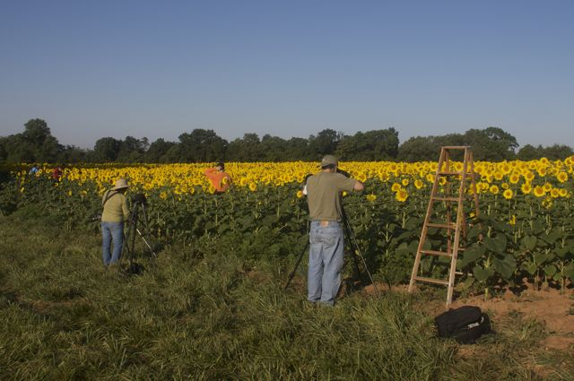 Photographers at the McKee-Beshers sunflower field