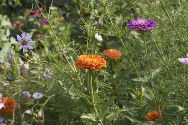 Continuing Flowers in the Cutting Garden