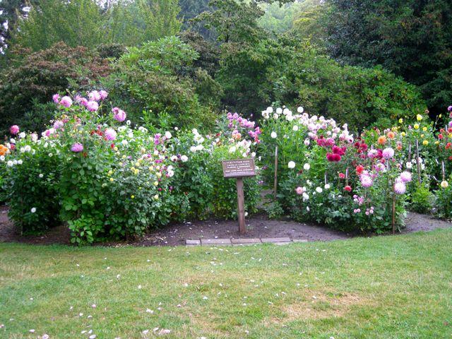Volunteer Park Dahlia Garden