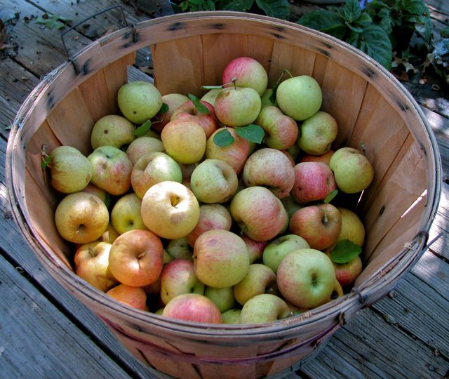 one of many apple baskets