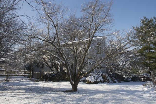 First snowfall covers the branches of the dogwood in the front yard
