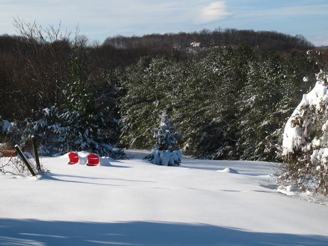 Our sledding hillside