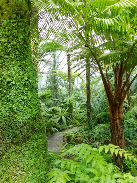 Each glasshouse reproduces a particular ecological niche